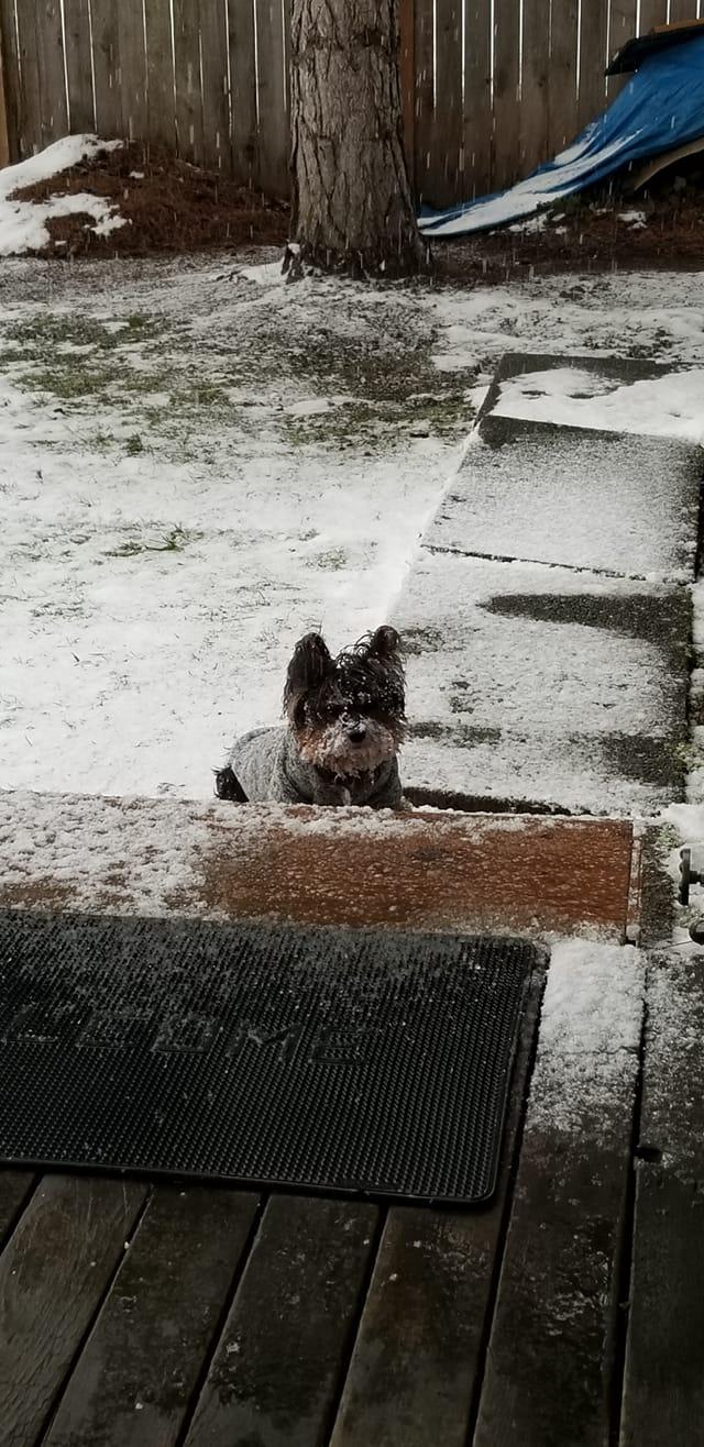 Name:  esco snow.jpg Views: 38 Size:  163.3 KB