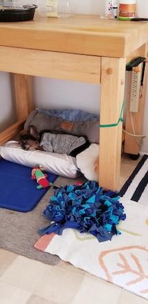 Name:  sleeping esco.jpg Views: 129 Size:  84.5 KB